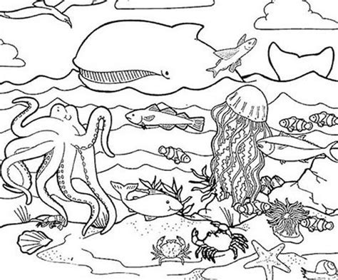 coloring page ocean animals sea life coloring page coloring home