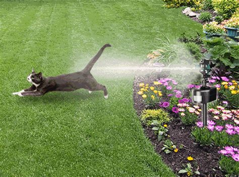 keep cats in backyard simple guide on how to keep cats out of your yard
