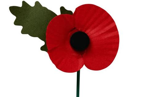 why the poppy is a symbol that should unite not divide