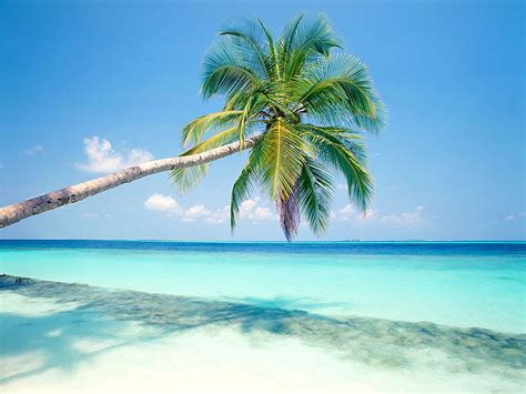 wallpaper: Palm Trees Wallpapers