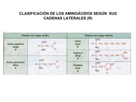 clasificacion de los aminoacidos segun sus cadenas laterales tema 4 prote 205 nas