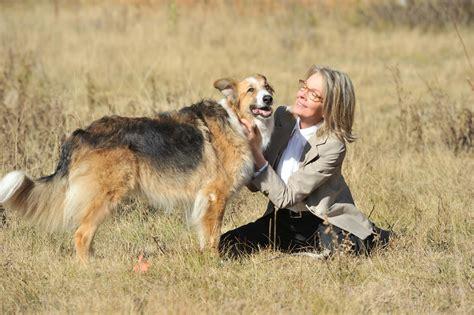 companion dogs companion photos