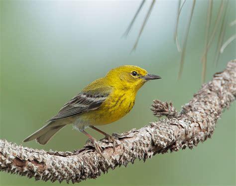 pin by he brinkley on backyard birds on loan pinterest