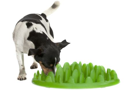 puppy eats fast if your eats fast green interactive feeder forces him to