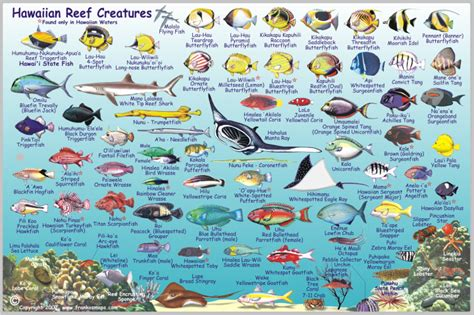 the ultimate guide to hawaiian reef fishes sea turtles image gallery hawaiian reef fish
