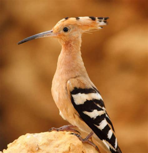 aves de europa todas las aves europeas en 1700 ilustraciones libro gratis descargar las aves m 225 s extra 241 as del planeta planeta curioso