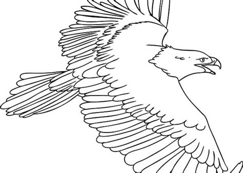 coloring pages osprey printable for kids adults free