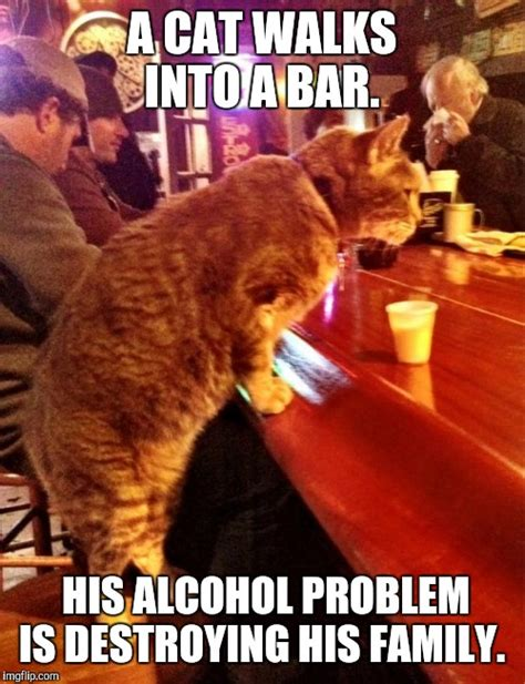 Drinking Problem Meme - anti joke cat imgflip