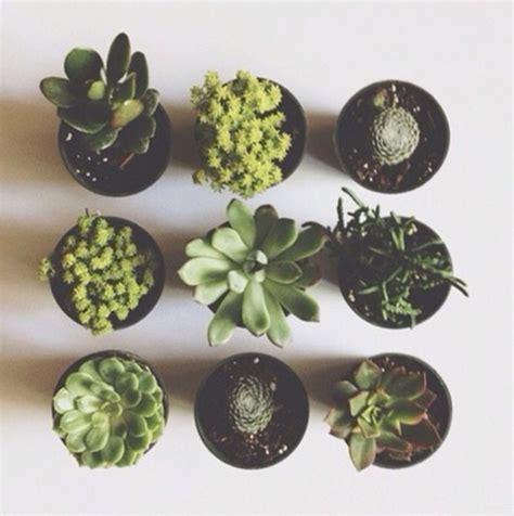home decor lifestyle artificial plants aloe vera plants pot plants home