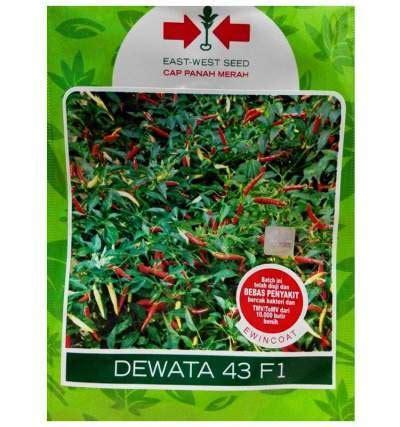 Benih Cabe Dewata F1 benih cabe dewata 43 f1 25 gram panah merah jualbenihmurah