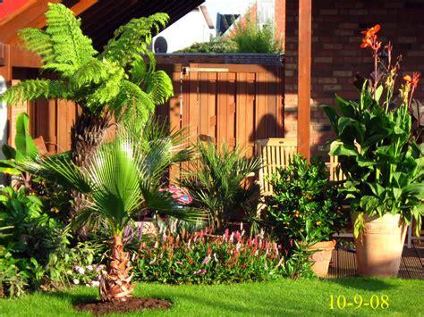 garten palmen garten 2008 exoten und palmen claus willich