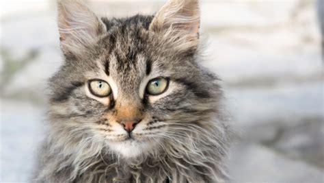 2 kittens in huis pelage des chats r 233 v 233 lateur de leur personnalit 233