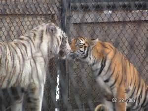 kissing kittys charmed682 deviantart