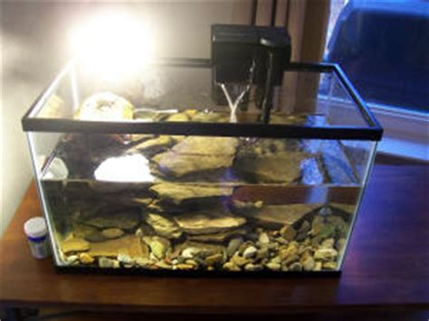 faqs about red ear slider turtle systems 2