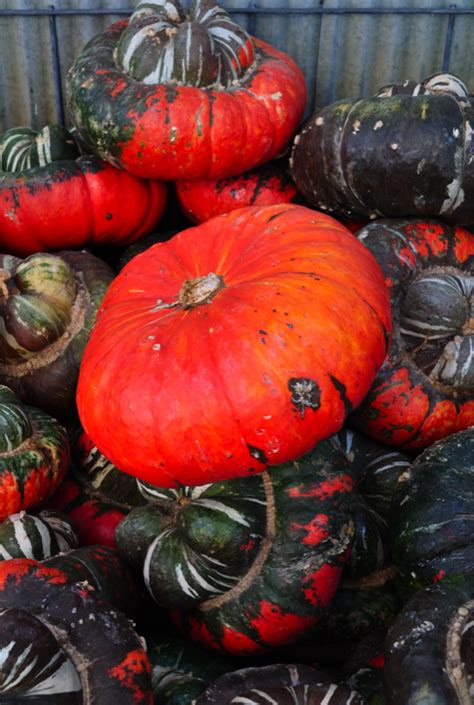 are pumpkins edible the ex expatriate s kitchen edible pumpkins links and