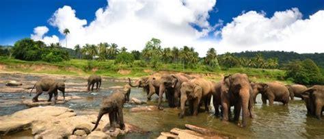 Entry Requirements For Mba In Sri Lanka by Urlaub S 252 Dwestk 252 Ste Sri Lanka Colombo Sigiriya Etc