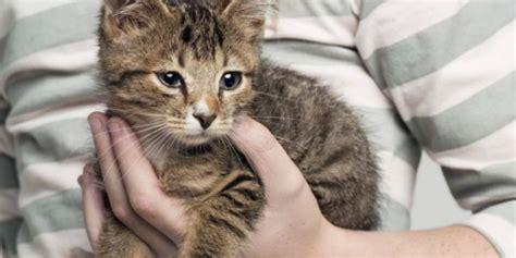 membuat rumah anak kucing ilmuwan pelihara kucing membuat anak anak jadi bodoh