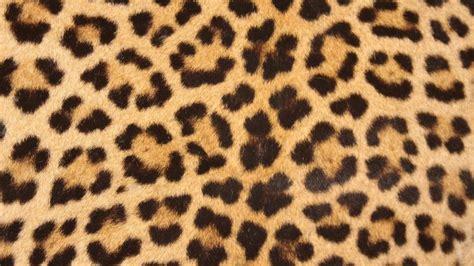 tappeti leopardati dettagli grintosi per la tua casa
