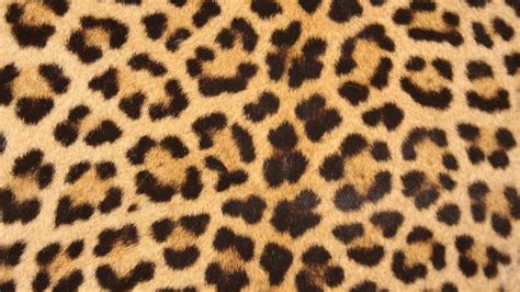 tappeti maculati westwing tappeti leopardati dettagli grintosi per la