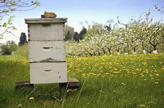 top bar beehive plans mother earth news langstroth top bar or warre choose the right hive for