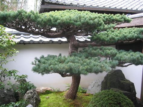 Japan Kyoto Daitoku Ji Zen Buddhist Temple Daisen In Zen Bonsai Rock Garden