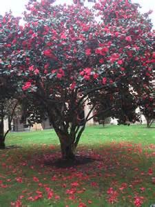 pretty trees pretty tree by pixi3angeldreamx on deviantart