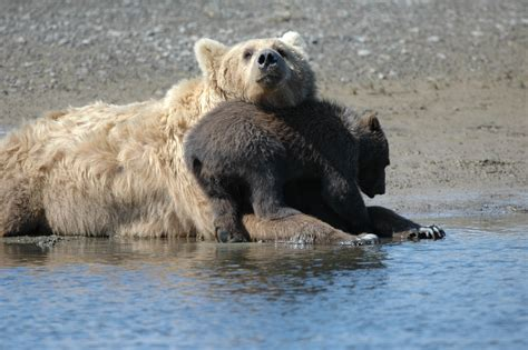 feds move to strip endangered species protections from