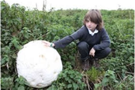 largest puffball world record found by finley o'neill