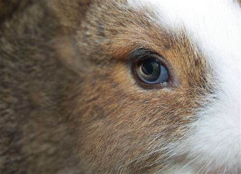 blue film on dogs eyes cloudy eye in rabbits petmd