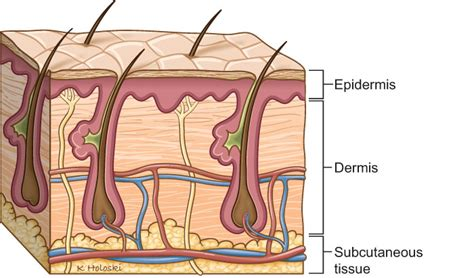 pattern analysis of tumors of epidermis and its appendages skin cancer anatomy headandneckcancerguide org