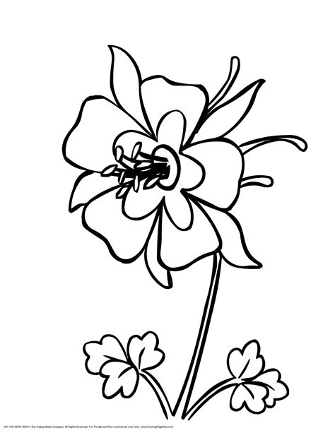 coloring pages flowers pdf colorado kids coloring pages state flower print as pdf