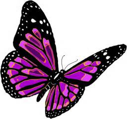 purple butterfly png1054 butterfly pictures big bang fish