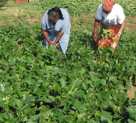 growsel reaffirms commitment assistance to subsistence farmers