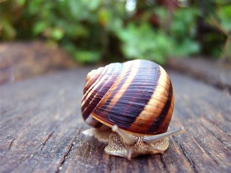 free detailed macro images and stock photos freeimages free snail macro stock photo freeimages