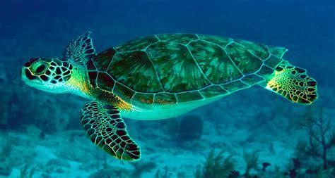 imagenes de libres y tortugas principales problemas saludables de las tortugas