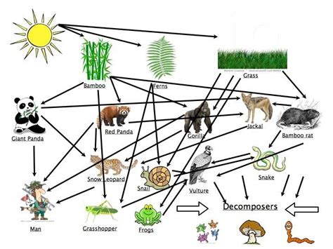 food webs on pinterest food chains science and food picture little robert pinterest food webs food