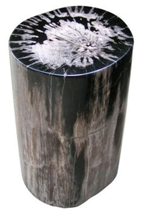 baumstumpf endtische drum petrified wood side table 8mp
