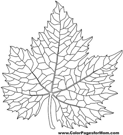 leaves coloring pages for adults advanced leaves coloring page 38