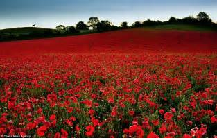 just in time for remembrance day the most beautiful