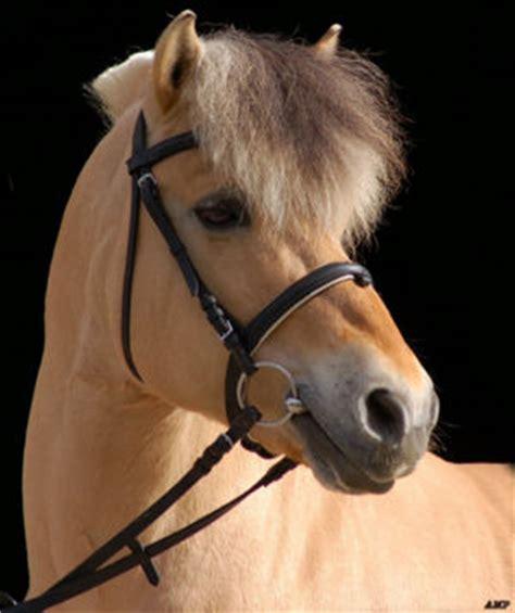 fjord paard fjordenpaard paarden encyclopedie