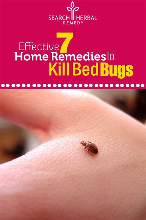 home remedies for bed bugs home remedies to kill bed bugs natural treatments cure