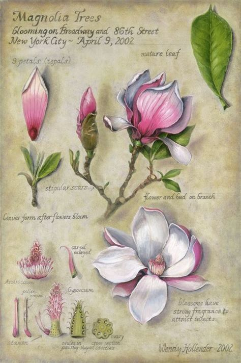 beginner s guide to botanical flower painting books best 25 botanical drawings ideas on botanical