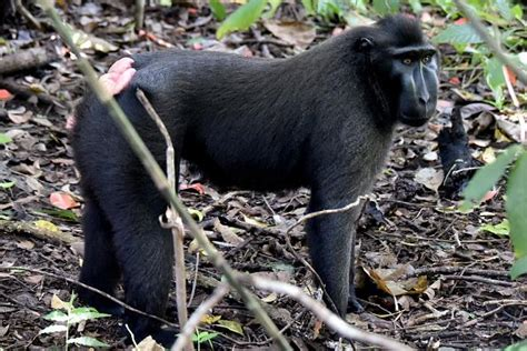 peta sues photographer david slater to try and get a photographer sued by selfie monkey selfie is broke he says