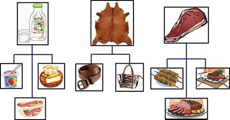 imagenes de animales y sus derivados vaca y sus derivados imagui