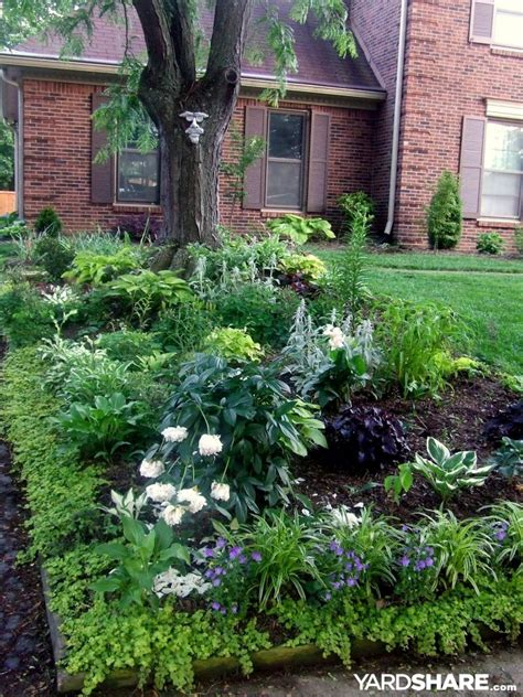 Shade Garden Ideas Landscaping Ideas Gt Shade Garden Yardshare