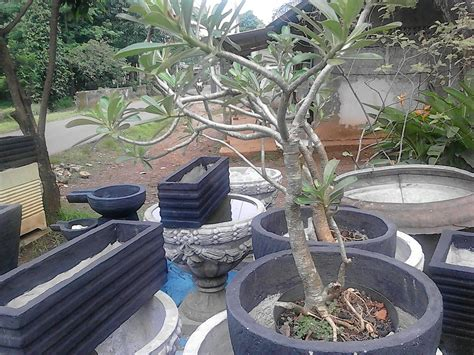 jual pot tanaman pot minimalis pot hias pot bunga
