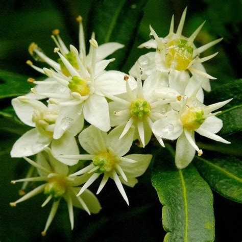 popular flowering shrubs current world news 10 best flowering shrubs