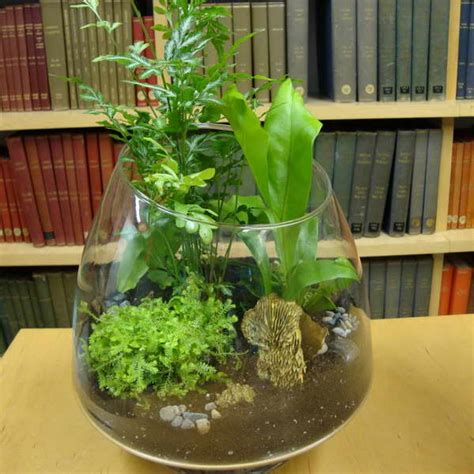 bloombety tropical terrarium plants with bookcase terrarium tropical plants