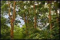 shenandoah national park pictures  national parks