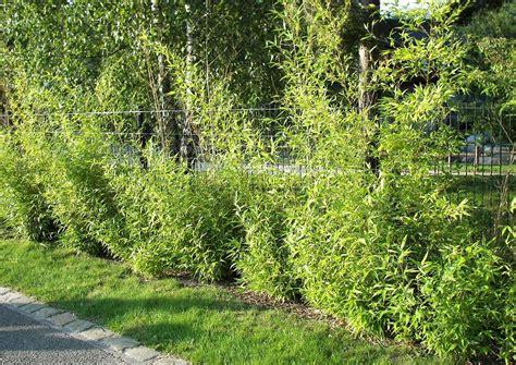 ideen für gartenbeete bepflanzung zaun idee